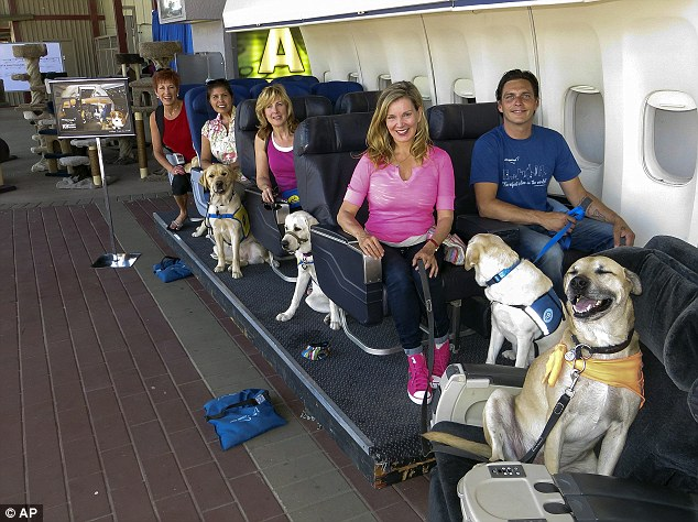 Airplane training for service dogs