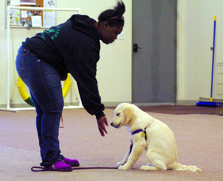 Fairbanks Service Dogs