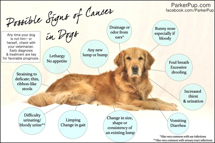 lymphoma cancer in dogs