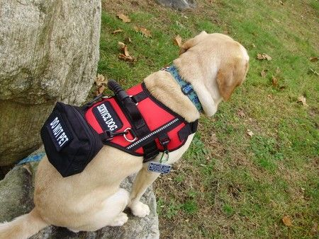 Assistance dog vest slippage and forex