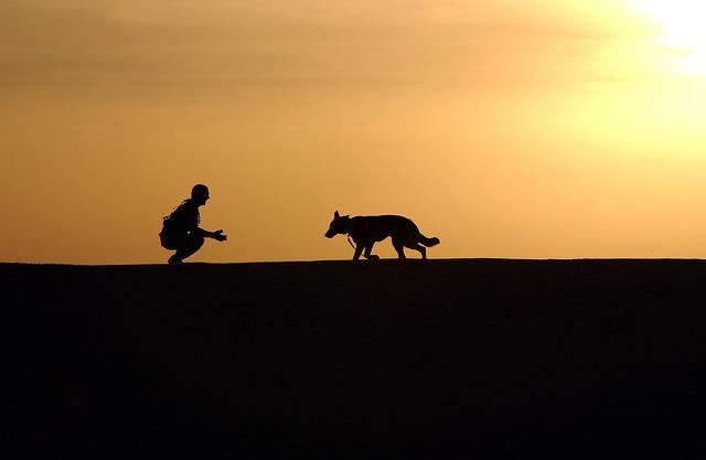 service dog guide