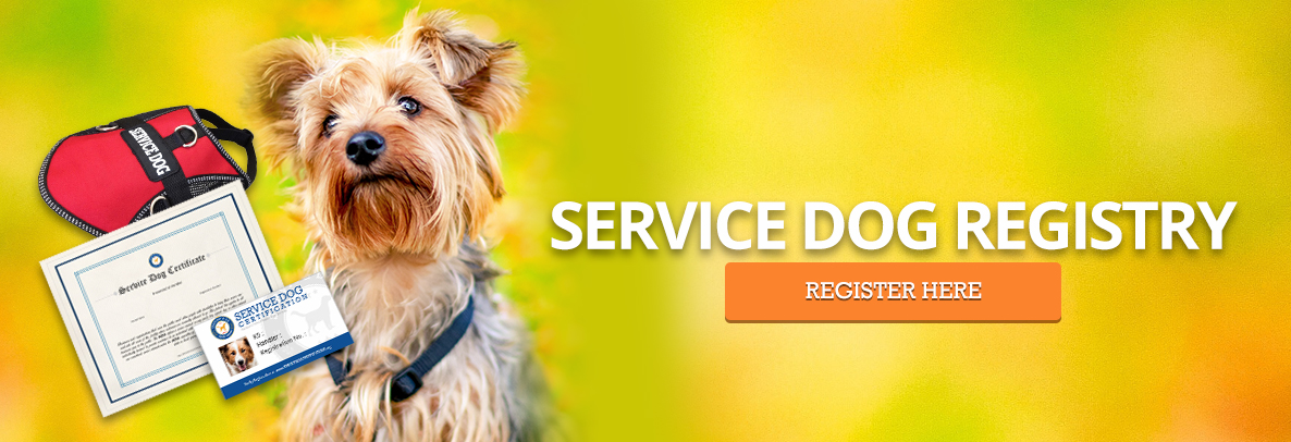 Yorkie Service Dog Registration