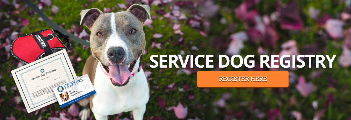 Service dog registration - Pitubll