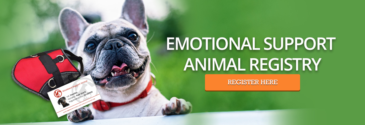 Emotional Support Dog Registration - French Bulldog
