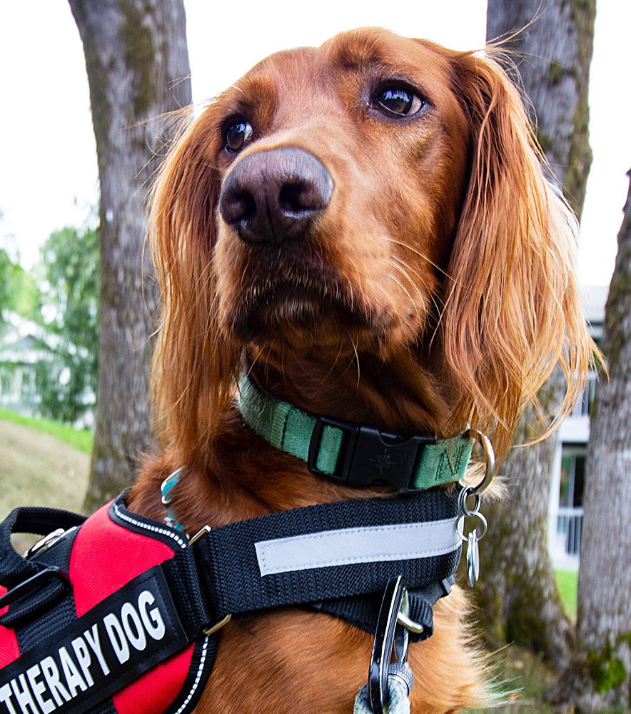 How Can My Dog Become a Therapy Dog - ServiceDogCertifications