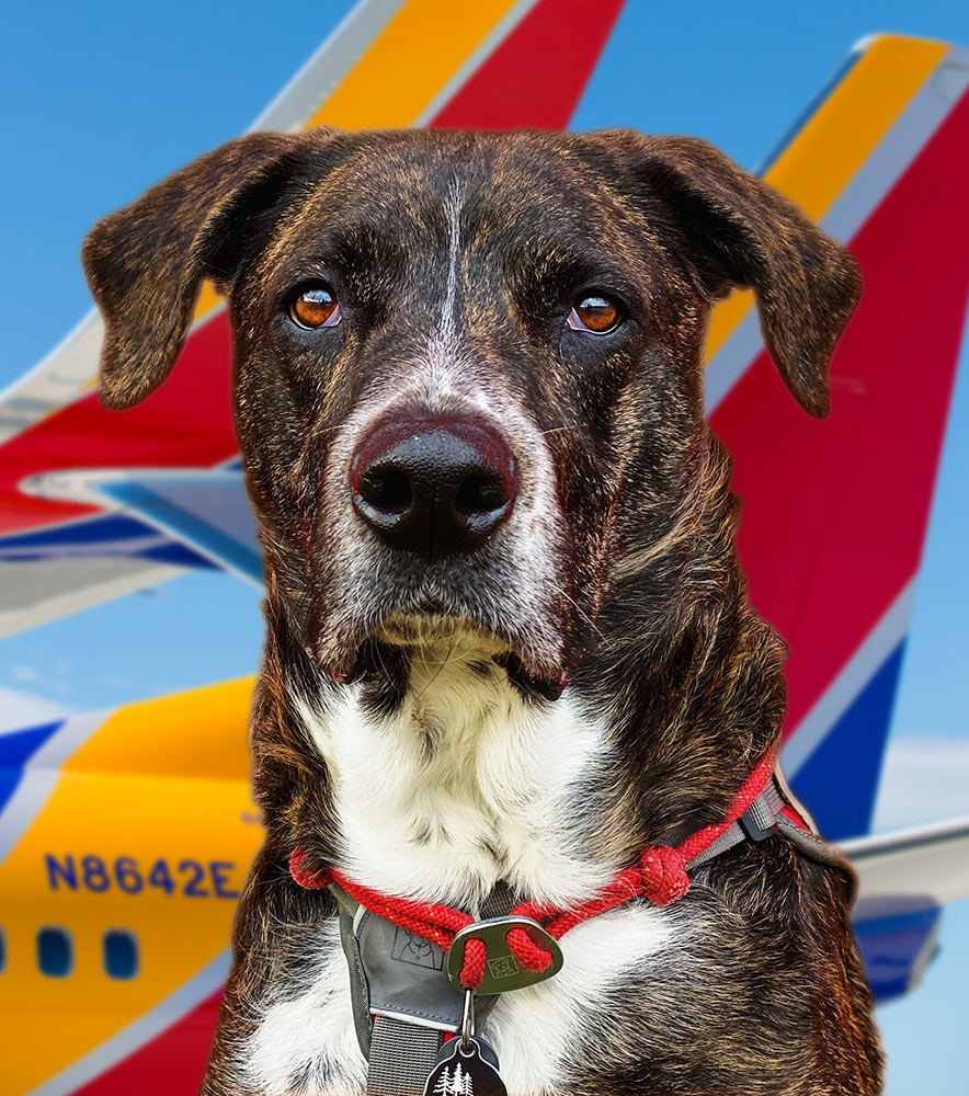 Southwest Airlines – Service Dog Policy and How to Fly With One - ServiceDogCertifications